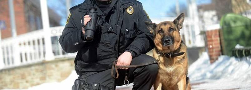 Após acidente de carro, cão policial se recusa a sair de perto de seu companheiro de trabalho