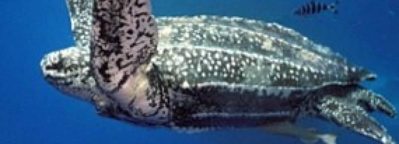 ICMBio participa de convenção para proteger tartarugas marinhas