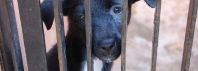 Direito dos animais entrará em debate em Lajeado