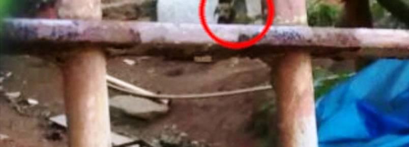 Cachorro confinado em coleira precisa de ajuda para ser resgatado
