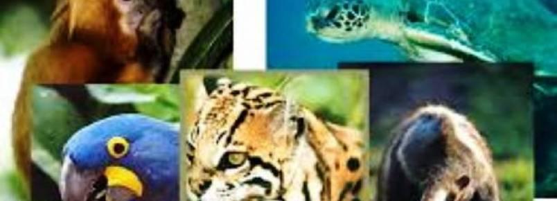 Animais silvestres apreendidos são recebidos na UPF