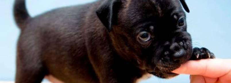 Meu cão não para de morder: o que fazer?