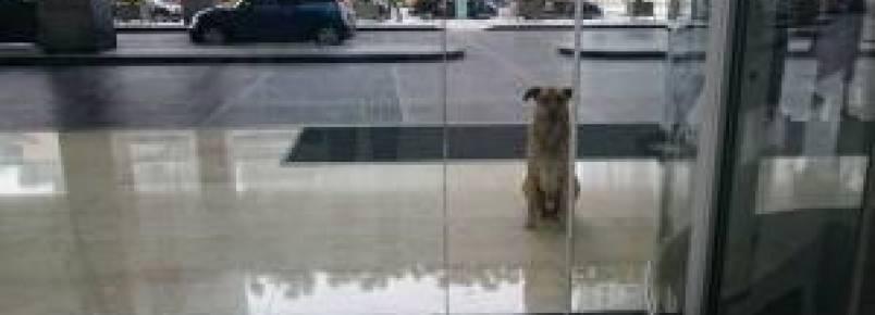 Aeromoça adota cão que sempre esperava ela chegar de viagem