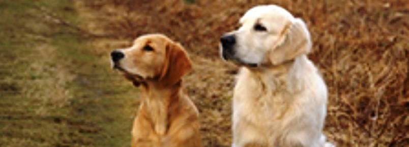 OAB MG discute direitos dos animais com autoridades de Belo Horizonte