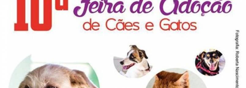 ONG realiza Feira de Adoção de animais no próximo domingo (14) em Goiânia