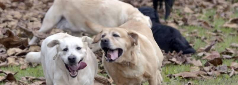 Cães da polícia serão leiloados por