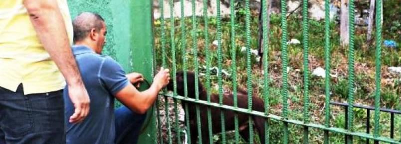 ONG ComPaixão Animal e Batalhão Ambiental resgatam cães abandonados em Manaus