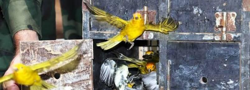 Aves ganham a liberdade após viverem em cativeiro no ES