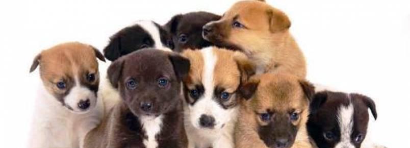 Feira de adoção de animais em Guaramirim
