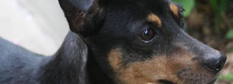 Segurança nas estradas: saiba o que fazer ao identificar animais nas pistas