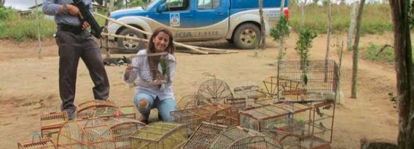 Quase 60 pássaros são apreendidos em Governador Mangabeira