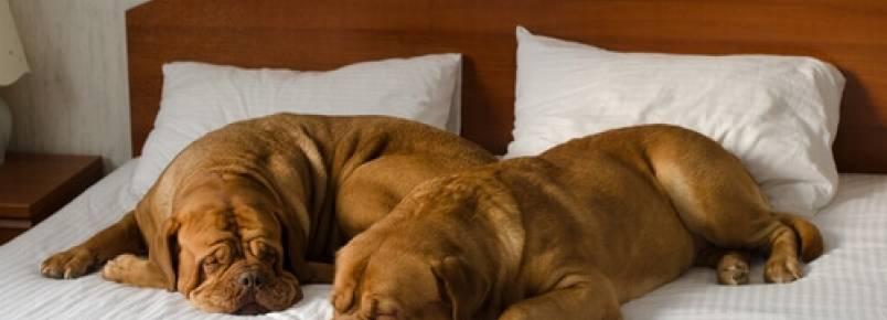 Como escolher um bom hotel para cães?