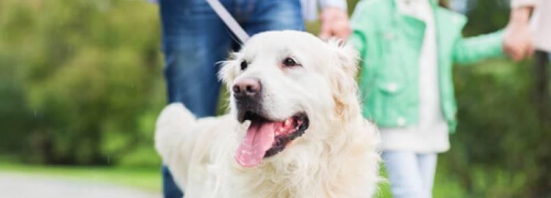 10 coisas que seu cão faz por você