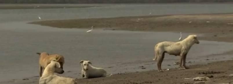 Conheça a ilha que é habitada somente por cães no Paquistão