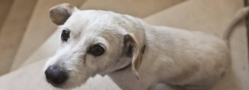 Perdi meu cachorro: 4 conselhos para encontrá-lo o mais rápido possível