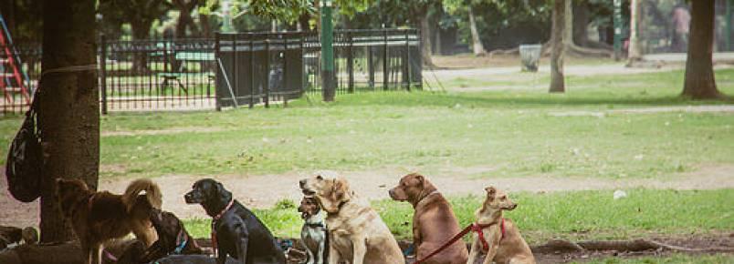 Aposentada cuida de 50 cães de rua