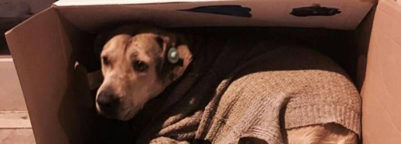 Voluntários recolhem cobertores para os cães de rua não morrerem ao frio