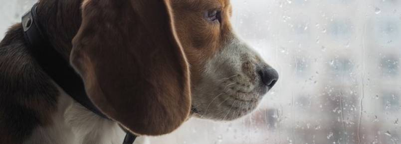 Veterinária lista cuidados com os animais durante as chuvas