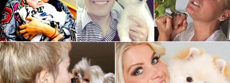 Fofuras: conheça os pets dos famosos que fazem tanto sucesso quanto os donos e bombam nas redes sociais