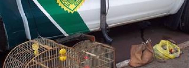Polícia apreende armas e pássaros silvestres em Mandaguari (PR)