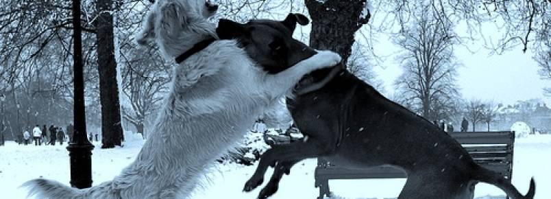 Ciúmes entre cães, como lidar?