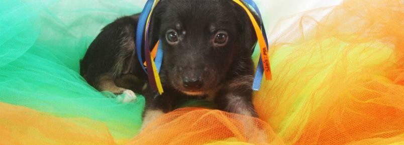 ONG faz fotos superproduzidas de animais carentes para estimular adoções