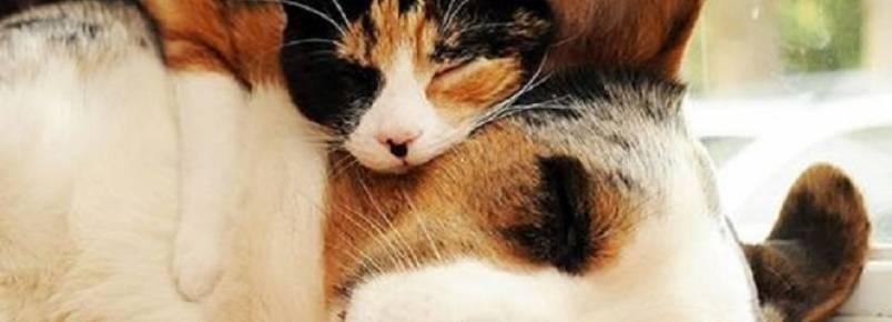 10 lindas fotos de animais sendo usados como travesseiros