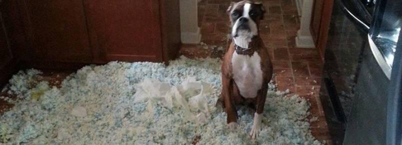 10 fotos que resumem bem como é ter um cãozinho em casa