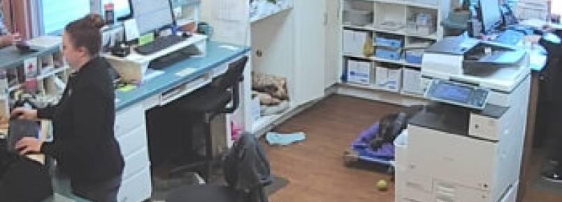 Carro entra com tudo em clínica veterinária e incrivelmente os cachorros presentes sobrevivem sem nenhum arranhão