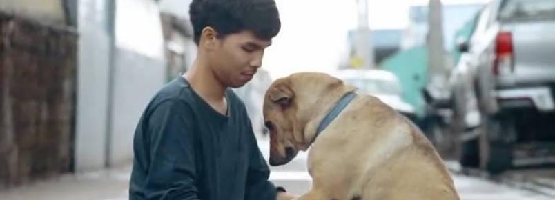 """Jovem tailandês passa o dia dando abraços em cães que moram nas ruas como parte do projeto """"Primeiro abraço"""""""