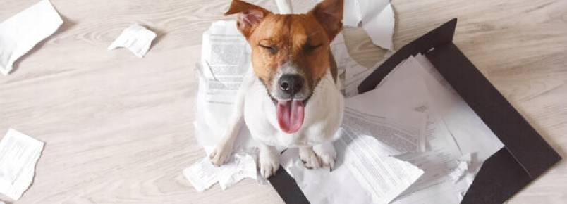 3 conselhos para que seu cão não destrua sua casa quando você não estiver nela
