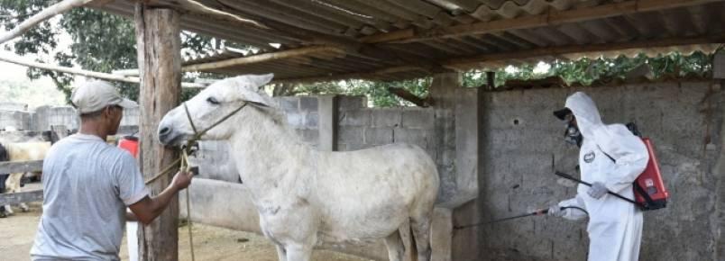 Cavalos de Contagem recebem banho de carrapaticida para conter avanço de febre maculosa