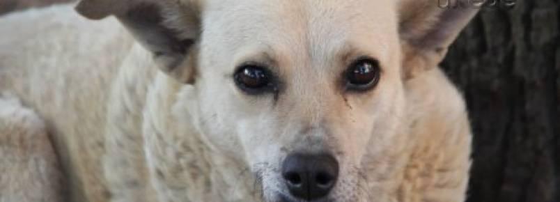 PG ganhará Centro de Atenção para animais de rua