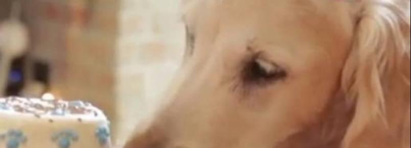 Bretagne é a última sobrevivente canina que trabalhou no resgate de vítimas no World Trade Center