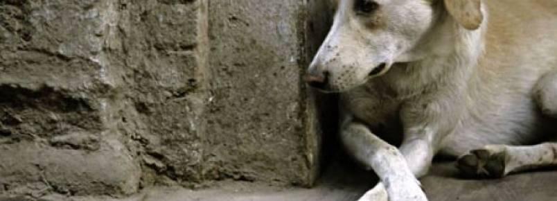Liminar obriga Rondonópolis a acolher animais de rua; se descumprida, prefeito pode ser afastado