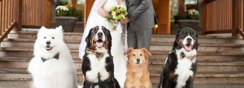 Quatro cachorros se tornaram as estrelas no casamento de sua tutora