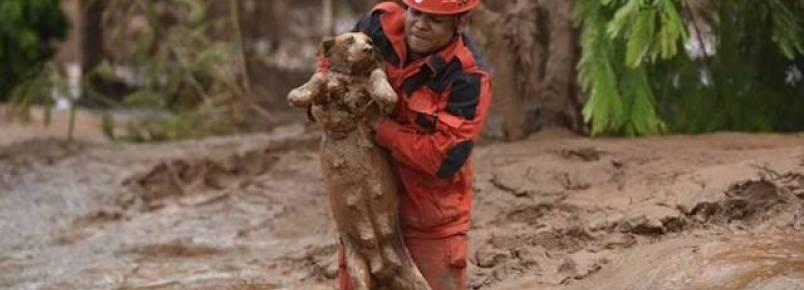 Bombeiros e voluntários resgatam animais após tragédia em Mariana (MG)