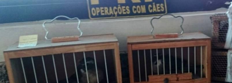 Polícia Rodoviária resgata aves vítimas de traficantes em Curitiba (PR)