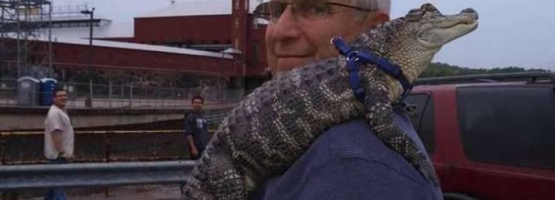 Conheça o jacaré que gosta de dar abraços em seu dono