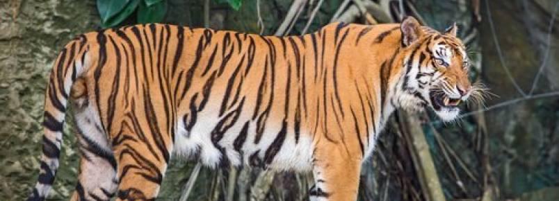 A fauna da Indochina: conheça 5 animais incríveis