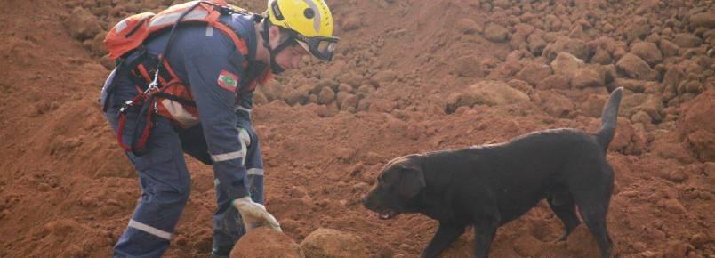 Cães Farejadores: cachorros que se tornam heróis
