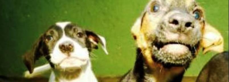 Parque Ecológico da Pampulha recebe feira de adoção de cães neste sábado