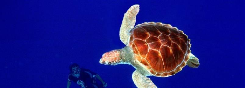 Projeto Tamar disponibiliza cartilha on-line sobre tartarugas marinhas
