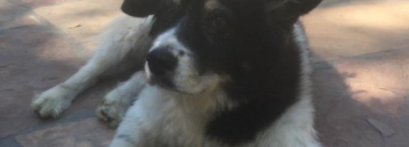 O cão do baixista Flea está velhinho mas faz tudo para proteger seu tutor