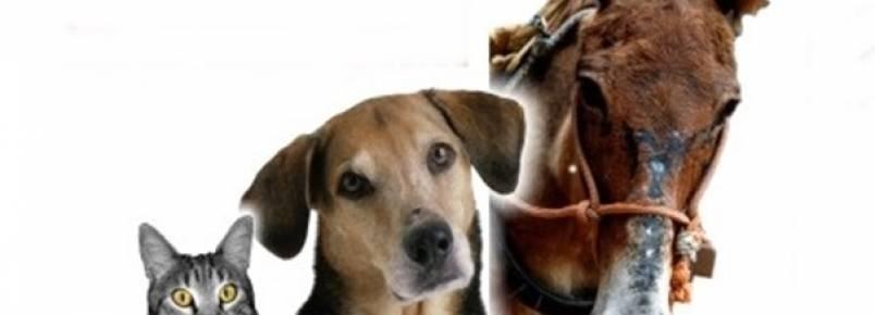Reunião entre delegado e ativistas discute avanços para a causa animal no município