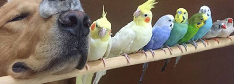 Cães, pássaros e hamsters: conheça uma história de amizade diferente