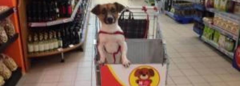 Mercadinho oferece carrinhos especiais para que tutores levem seus cães na hora de fazer compras