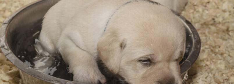 Uma nova vida para dois cães abandonados em contêineres de lixo