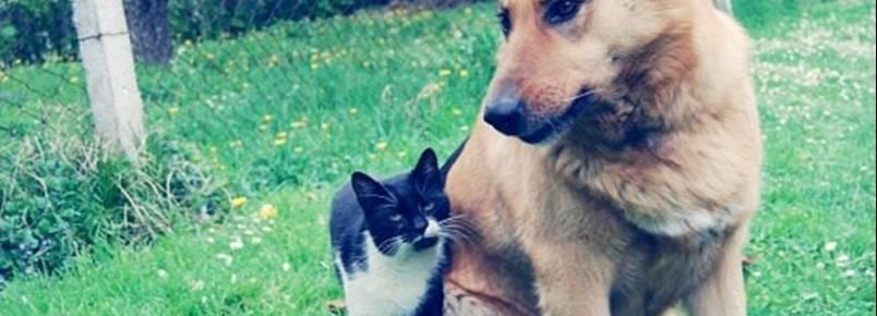 Lei dos maus-tratos a animais discutida no Parlamento