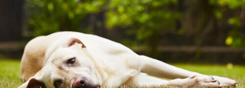 Coisas que estressam os cães